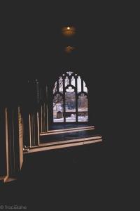 TraciElaine.com Shadows2