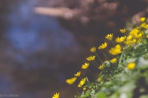 TraciElaine.com Signs of Spring