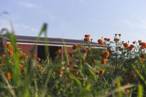 Simple Things  - Maple Acres Farm