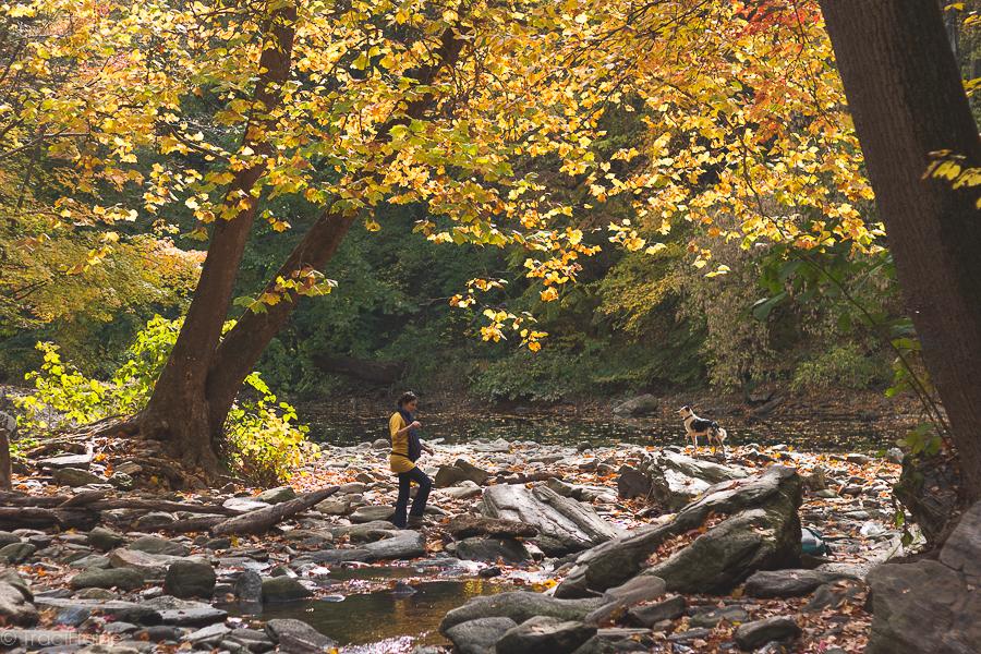 TraciElaine.com: Wissahickon in Autumn