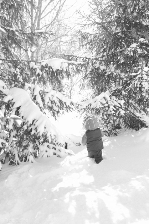 TraciElaine.com | After the Blizzard