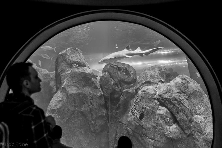 TraciElaine.com | Adventure Aquarium | Philadelphia Adventures