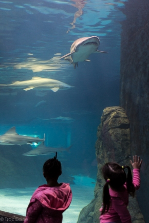 TraciElaine.com | Adventure Aquarium | Philadelphia Adventures
