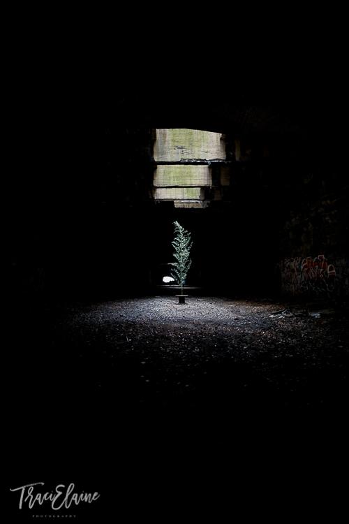 TraciElaine.com | Reading Tunnel