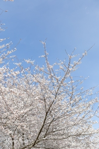 TraciElaine.com | Spring in Fairmount Park Philadelphia