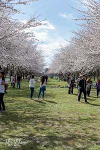 TraciElaine.com   Spring in Fairmount Park Philadelphia