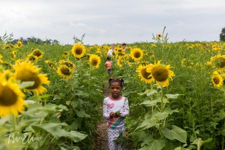 Sunflower-21